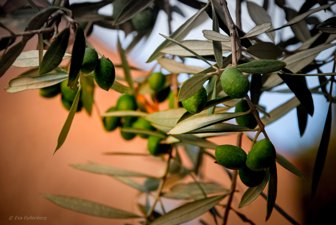 Mysiga favoriter i sydvästra Provence 1
