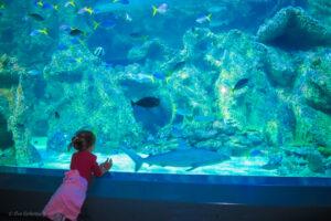 Sydney med barn - topp fem sevärdheter 16