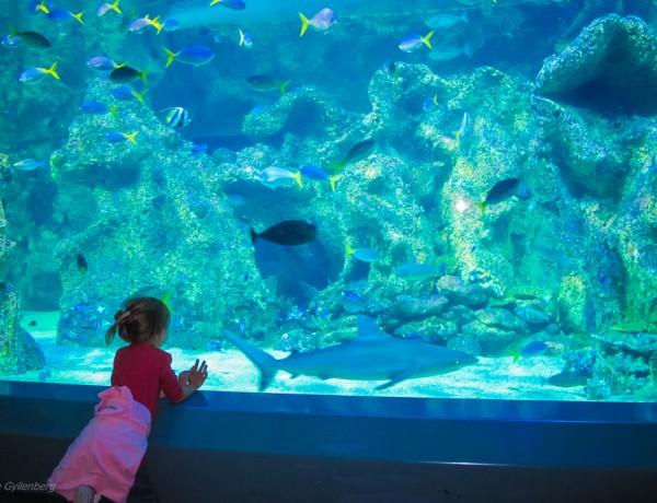 Sydney med barn