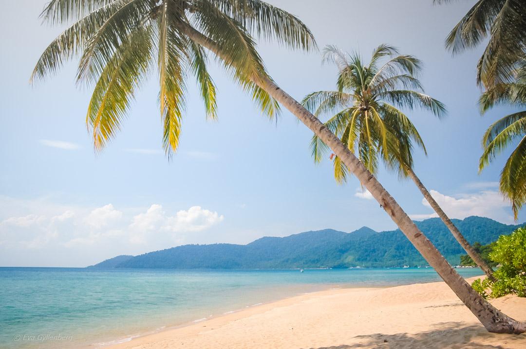 Fotoalbum från Pulau Tioman 25