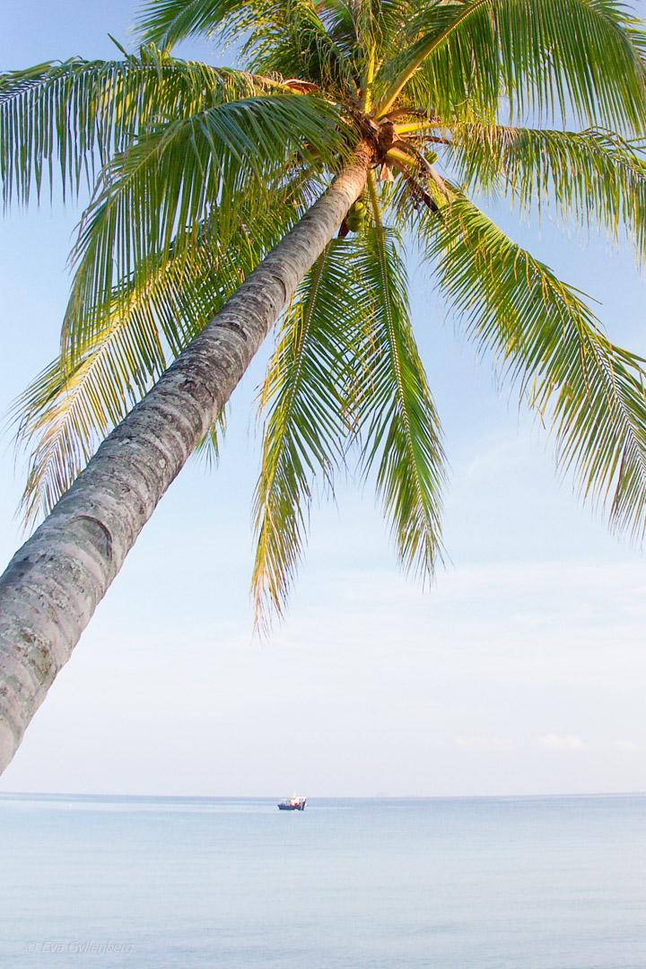 Fotoalbum från Pulau Tioman 29