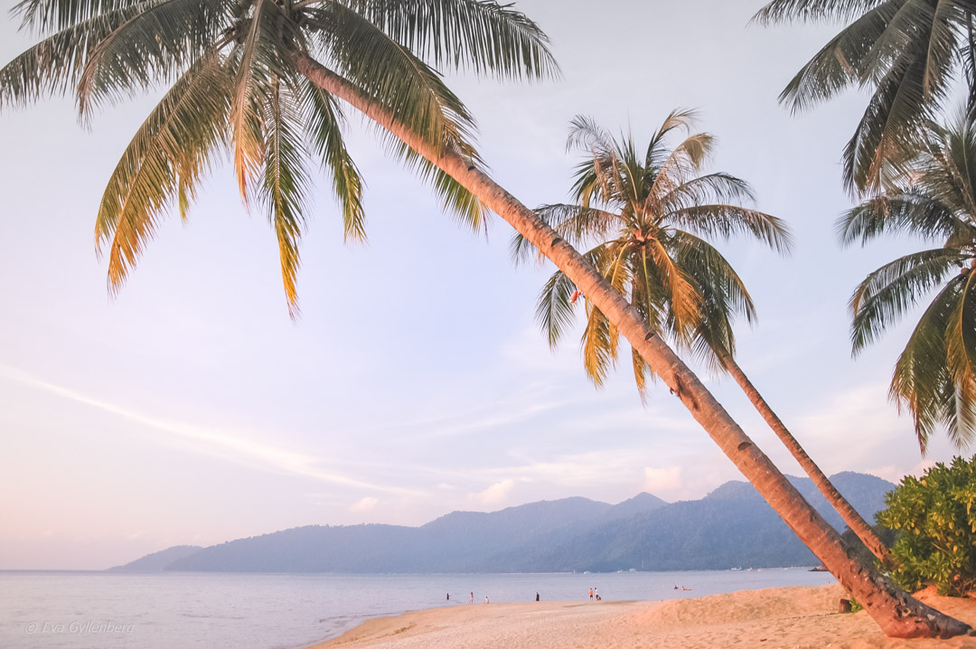 Fotoalbum från Pulau Tioman 15