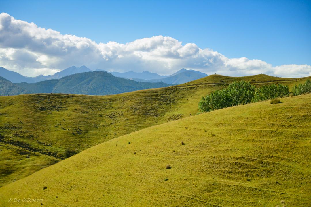Hokitika och Punakaiki - Resedagbok Nya Zeeland dag 7 39