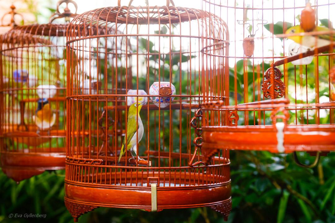 Yuen Po Bird Garden, Hong Kong