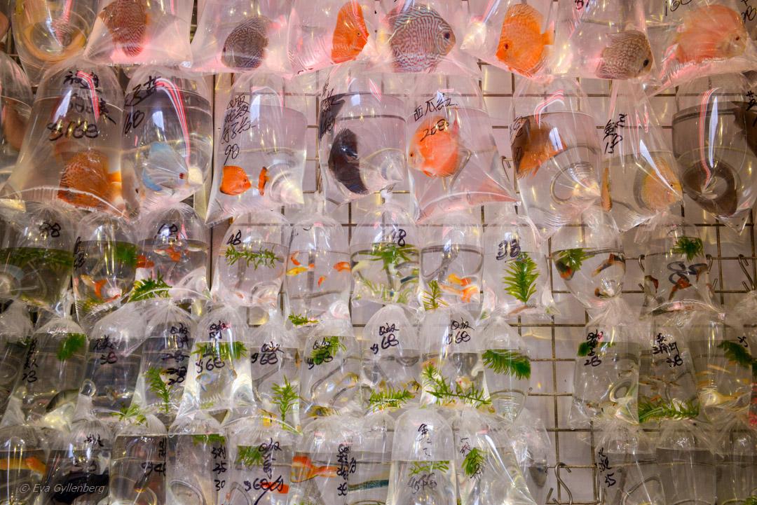 Hong Kong Fishmarket