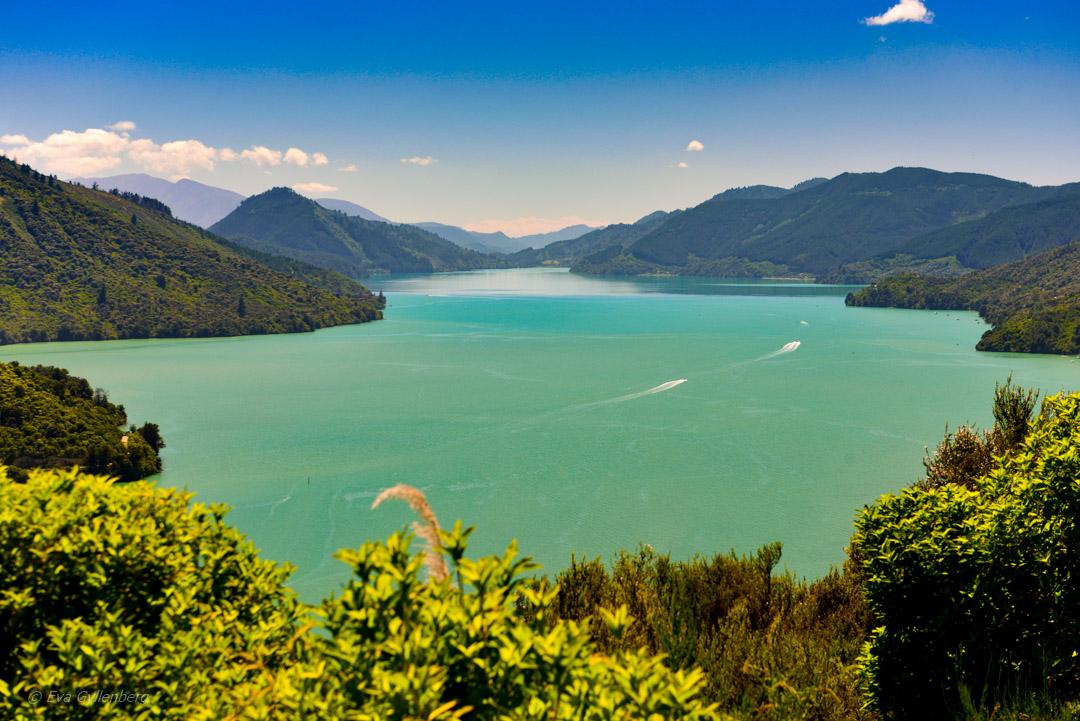 Vingårdar i Marlborough - Resedagbok Nya Zeeland dag 9 8