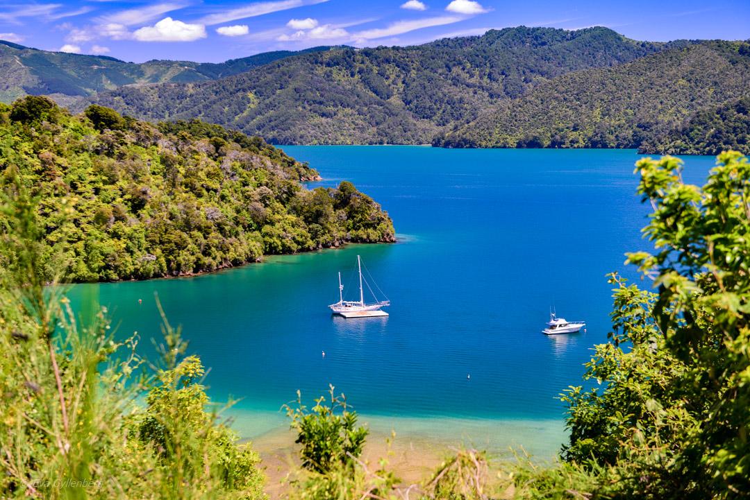 Vingårdar i Marlborough - Resedagbok Nya Zeeland dag 9 12