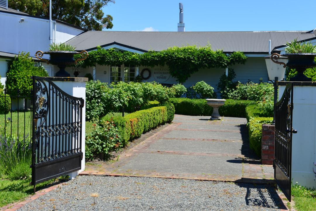 Vingårdar i Marlborough - Resedagbok Nya Zeeland dag 9 22