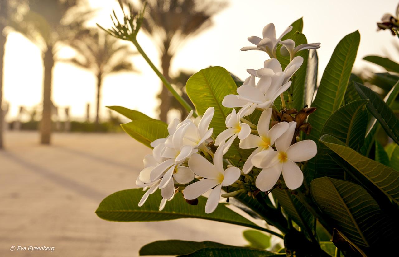 Blomsterprakt - Dubai - UAE