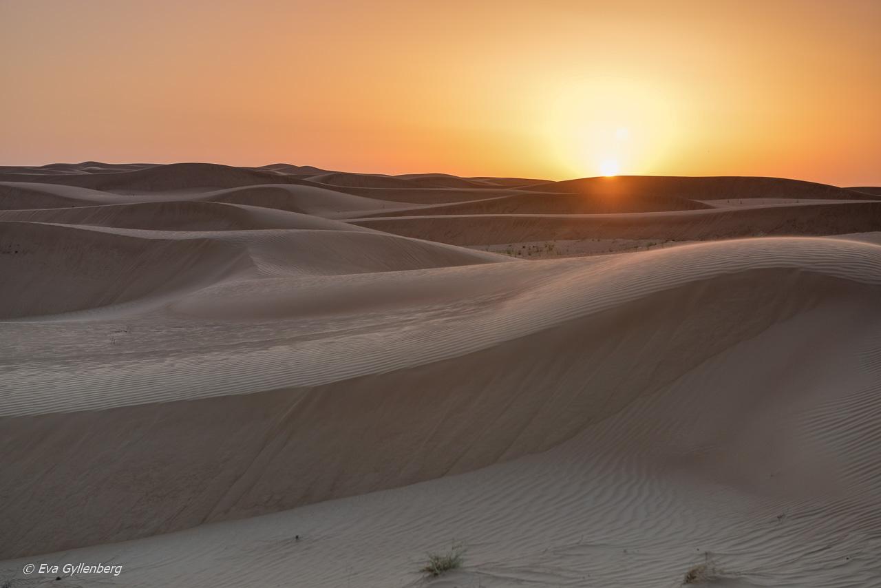 27 bilder som får dig att vilja åka till Dubai
