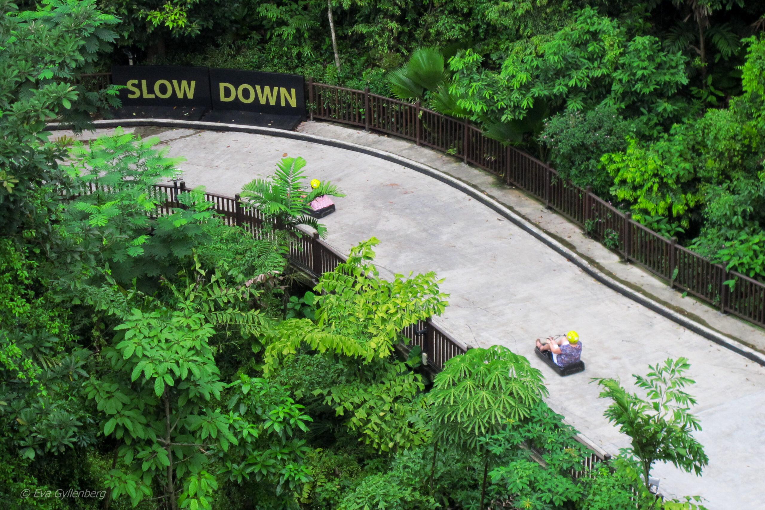 Singapore med barn - reseguide till mina 14 favoriter 18