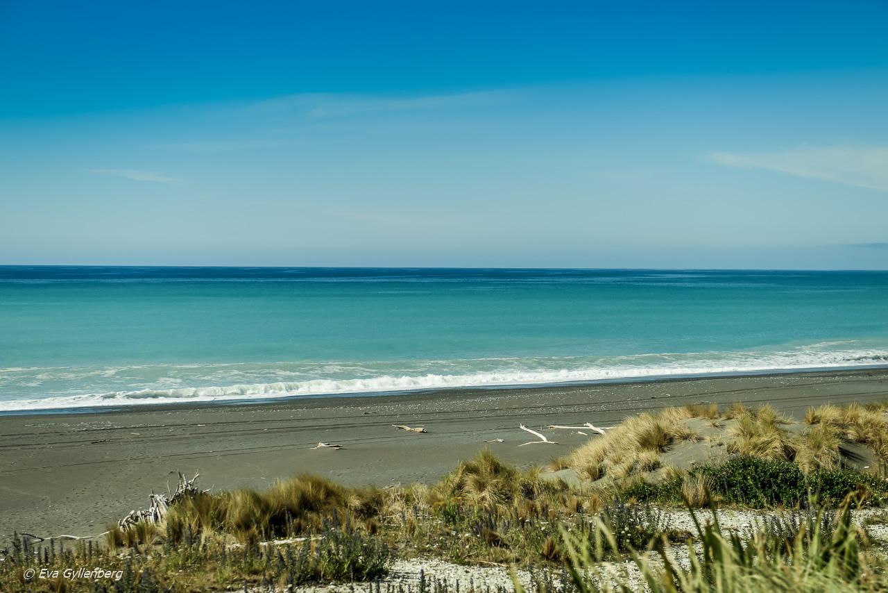 Valskådning i Kaikoura - Resedagbok Nya Zeeland dag 10 12
