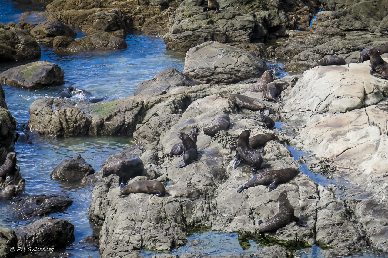 Oahu Point Seal Colony