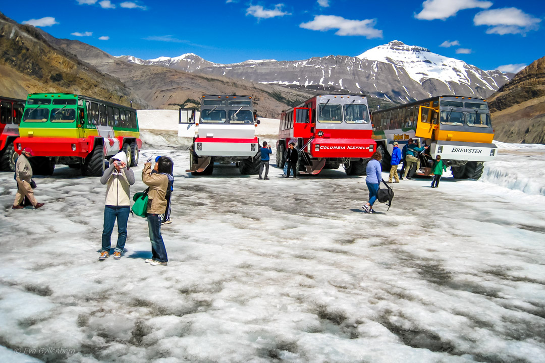 Columbia Icefields 2