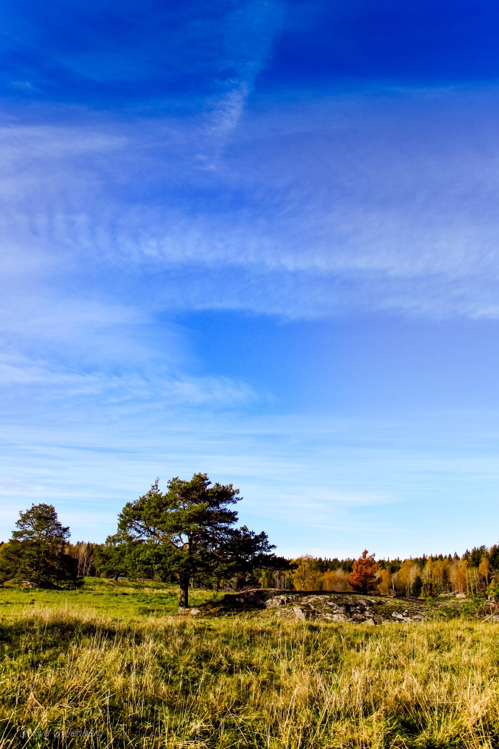 Tyresta Nationalpark: Ängar