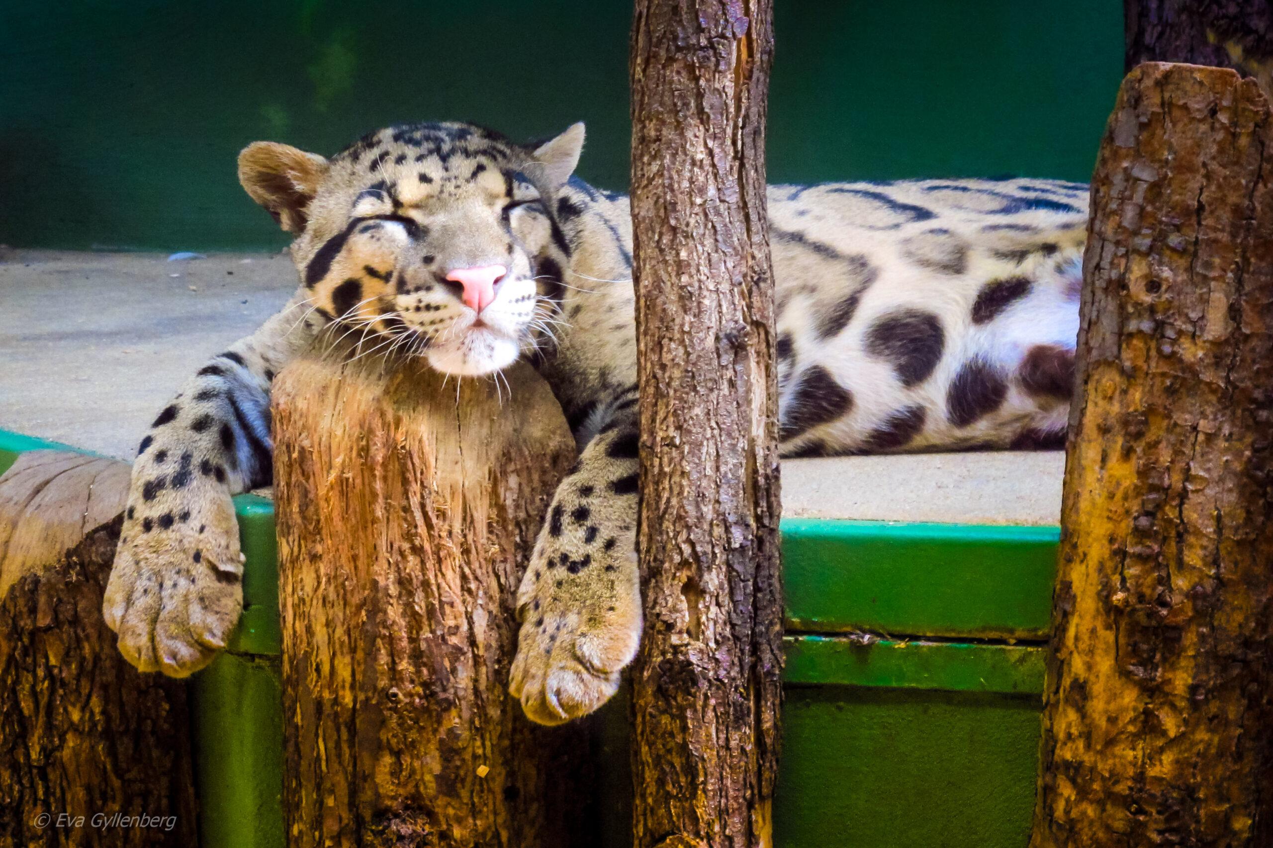 Zoo-Prag-Tjeckien