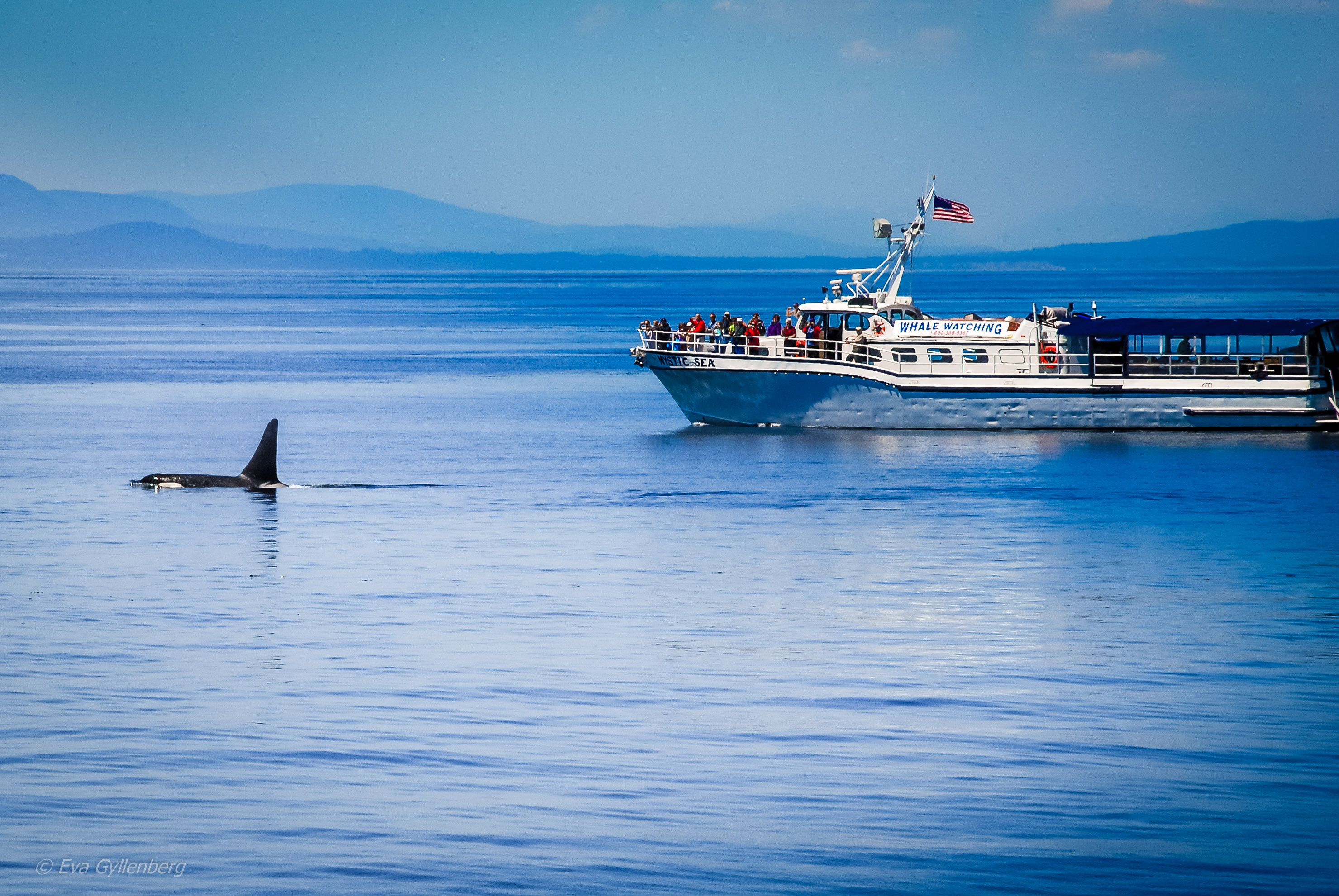 Spackhuggare Orcas Anacortes 4