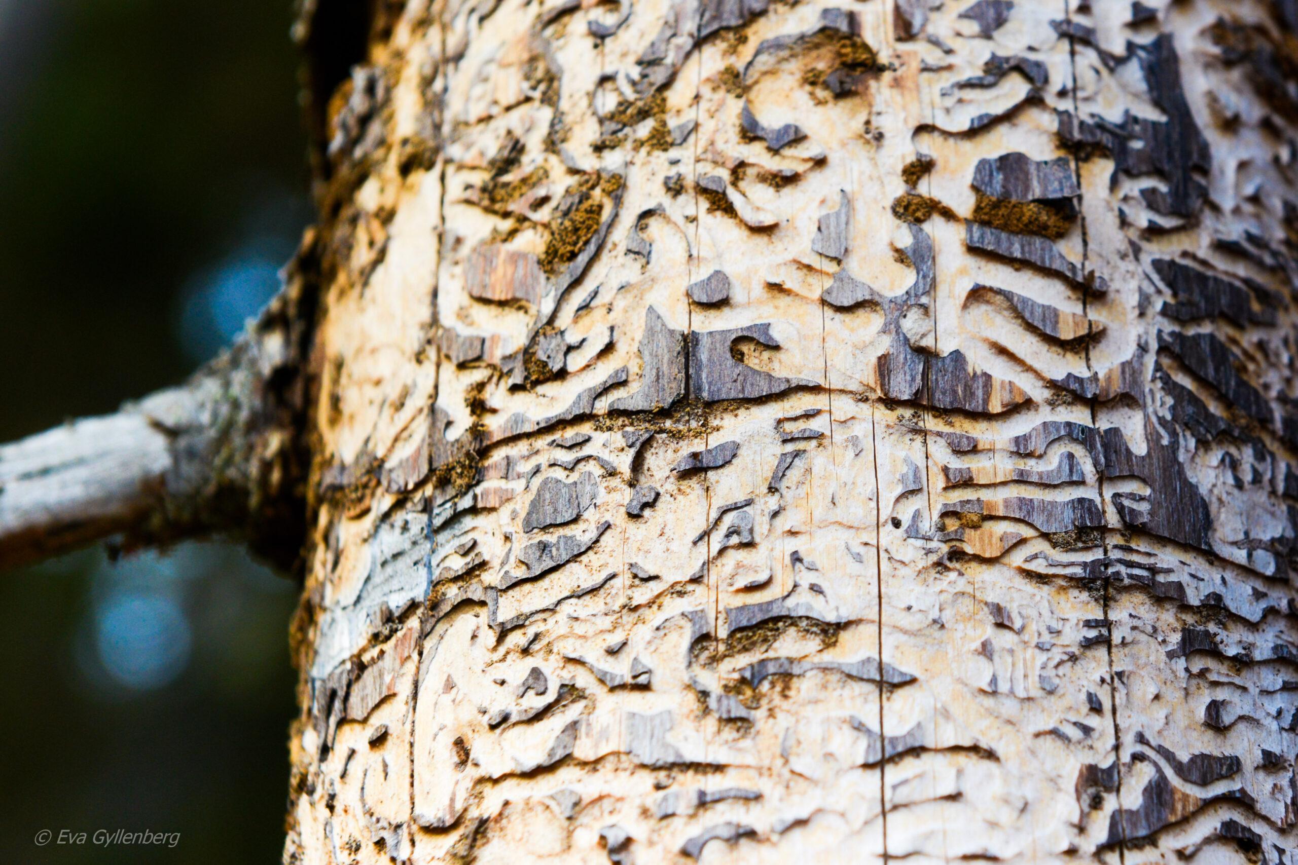 Tyresta nationalpark: Bark