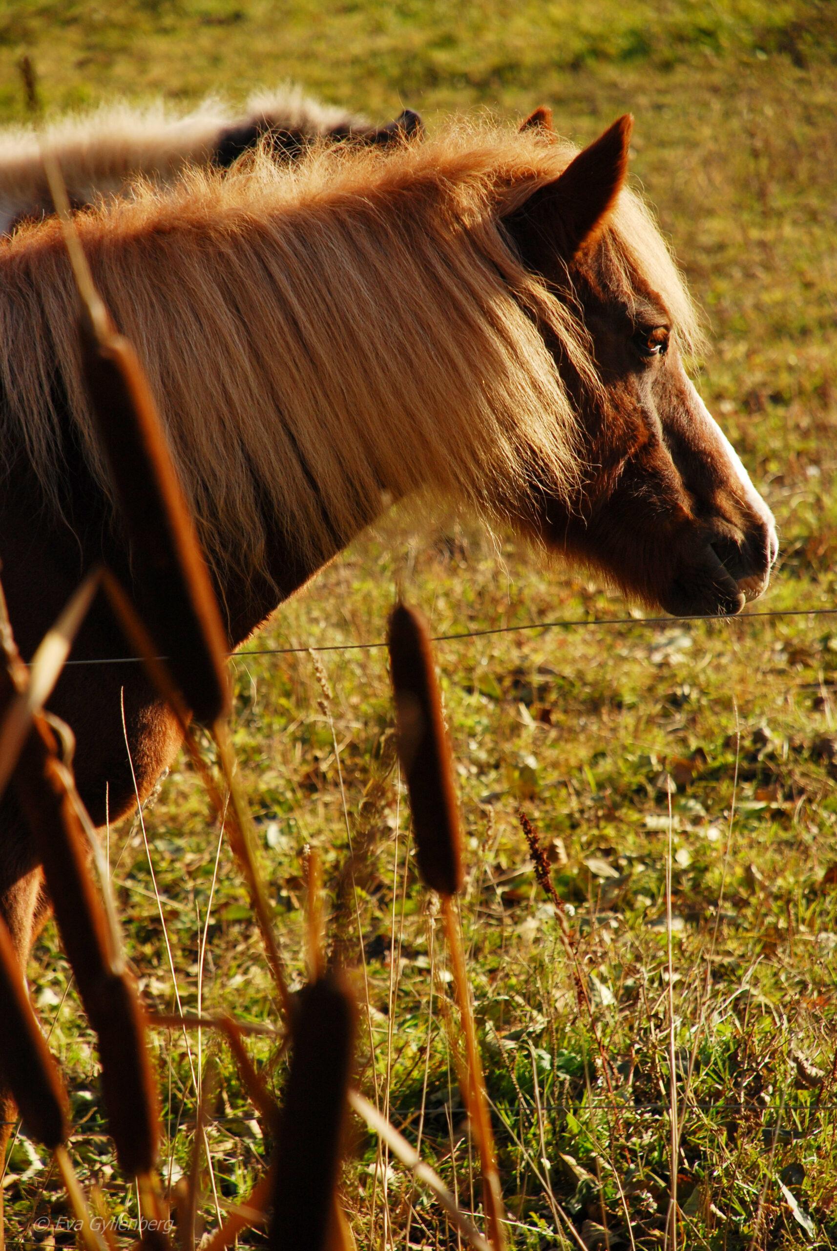Hästar i Tyresta by