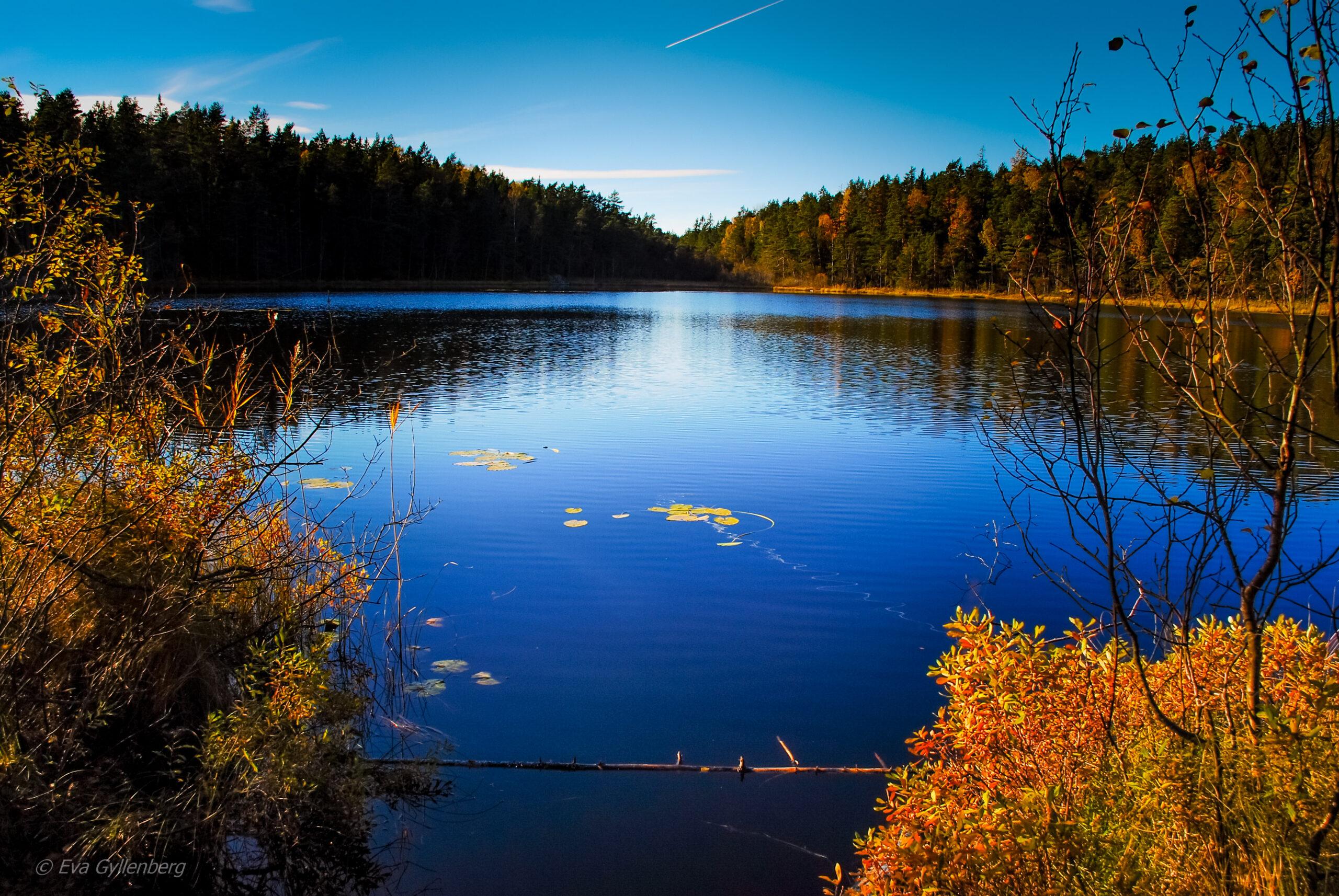 Tyresta nationalpark: Sjö