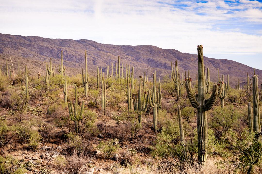 Ranchäventyr på Tanque Verde Ranch i Arizona 28