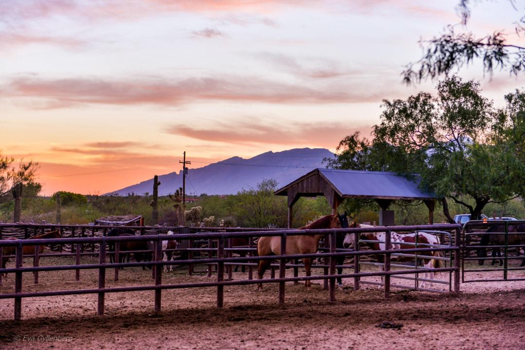 Ranchäventyr på Tanque Verde Ranch i Arizona 26