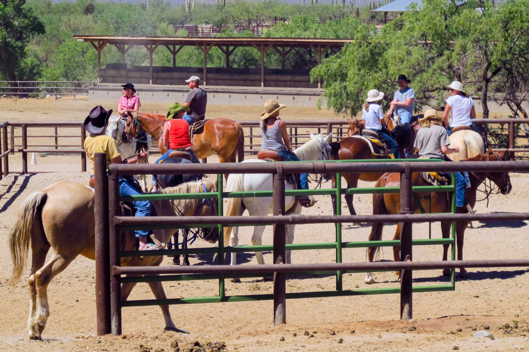 Ranchäventyr på Tanque Verde Ranch i Arizona 22
