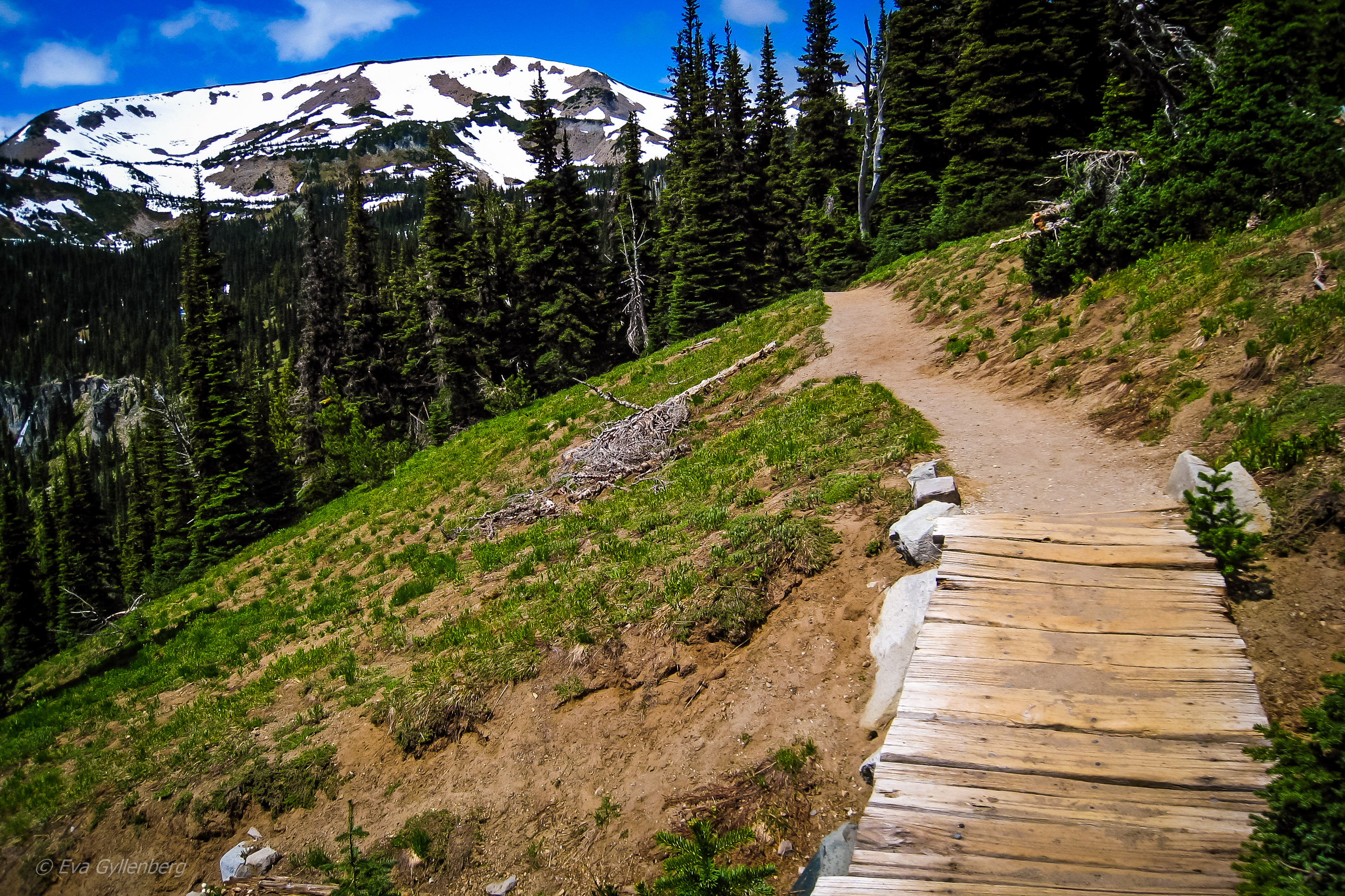 Vandring i Mount Rainier- Washington