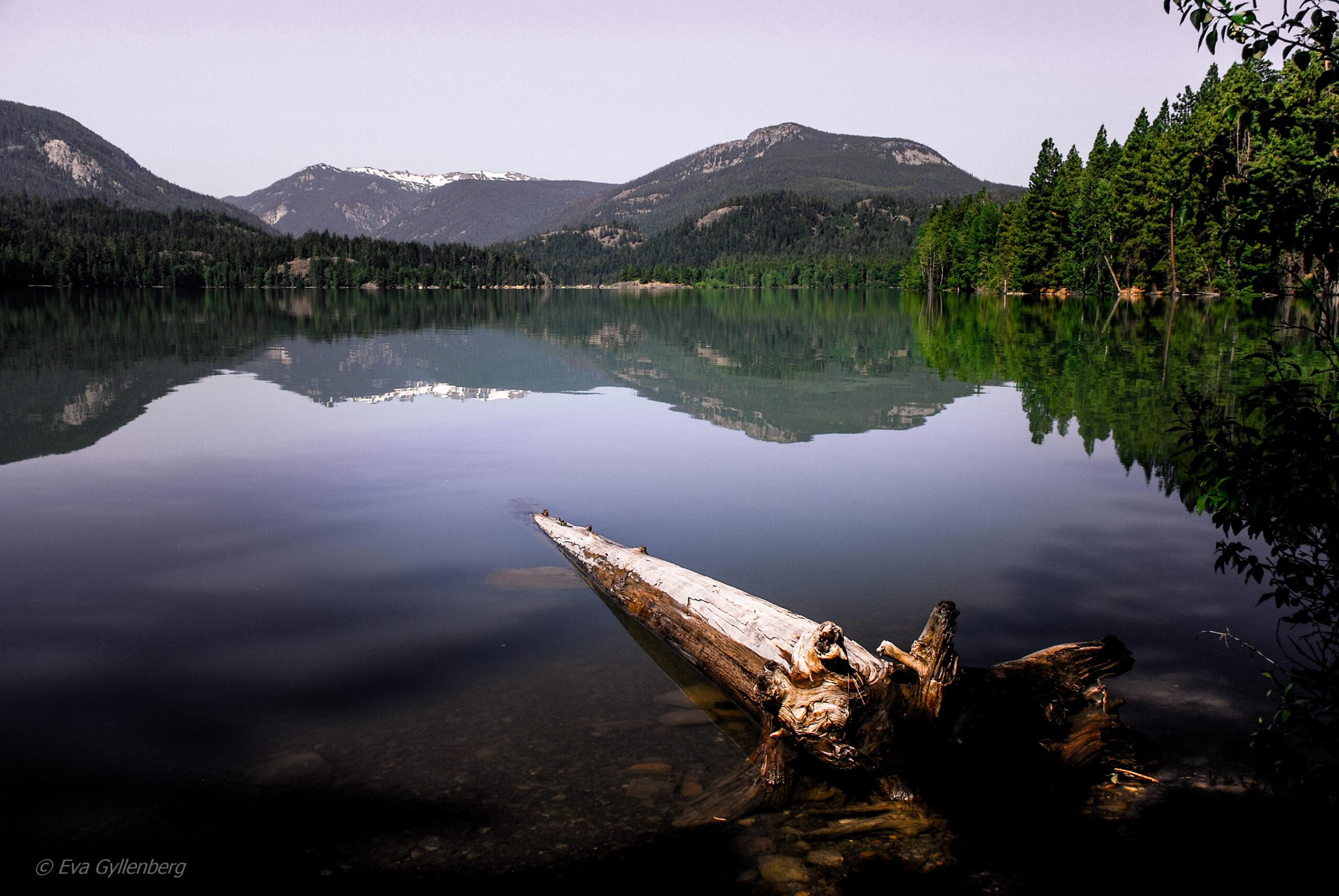 Spegelblank morgon - Mount Rainier