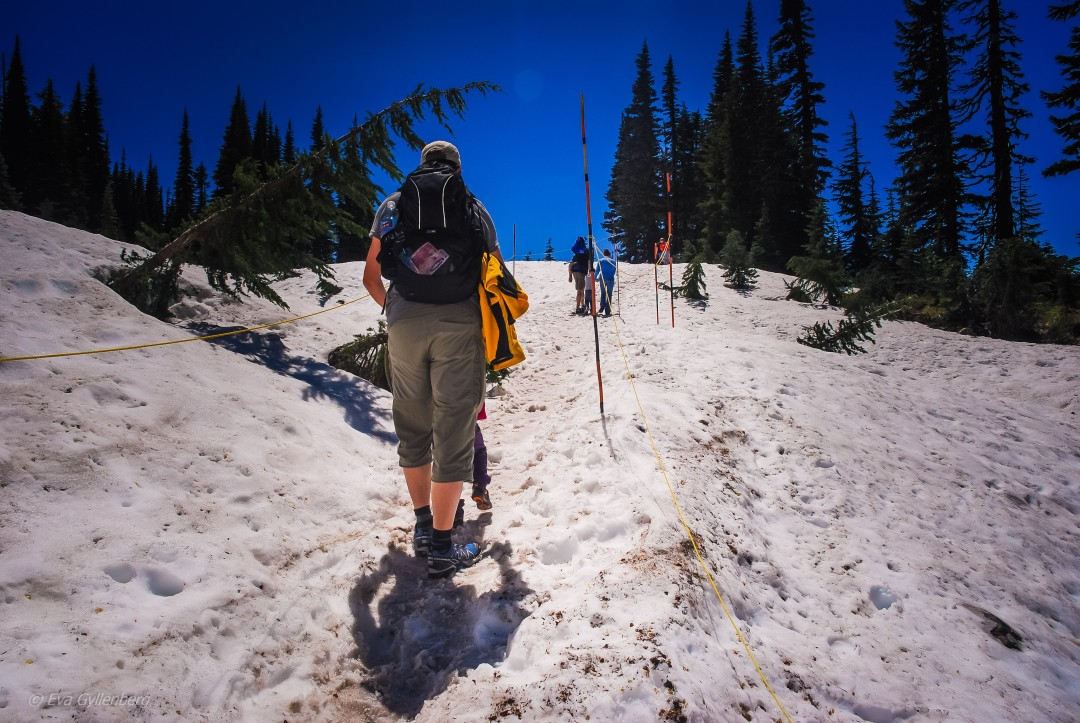Sommarvandring på snö - Mount Rainier - Washington