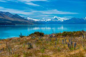 Mount Cook och en fårfarm - Resedagbok Nya Zeeland dag 12 27