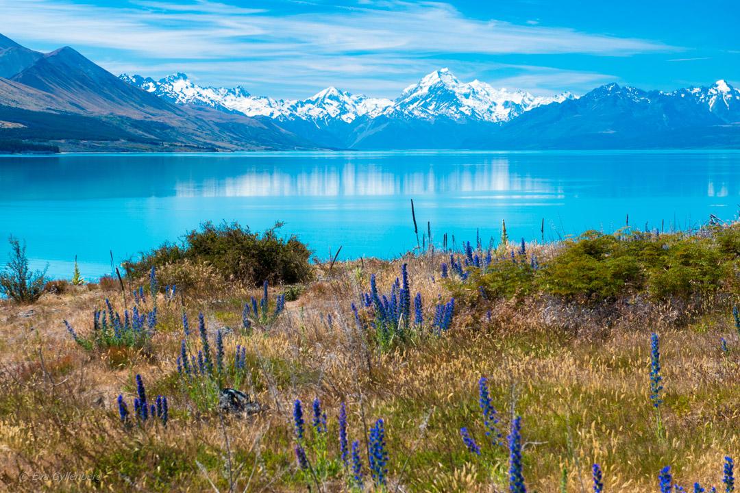 Nya Zeeland 17