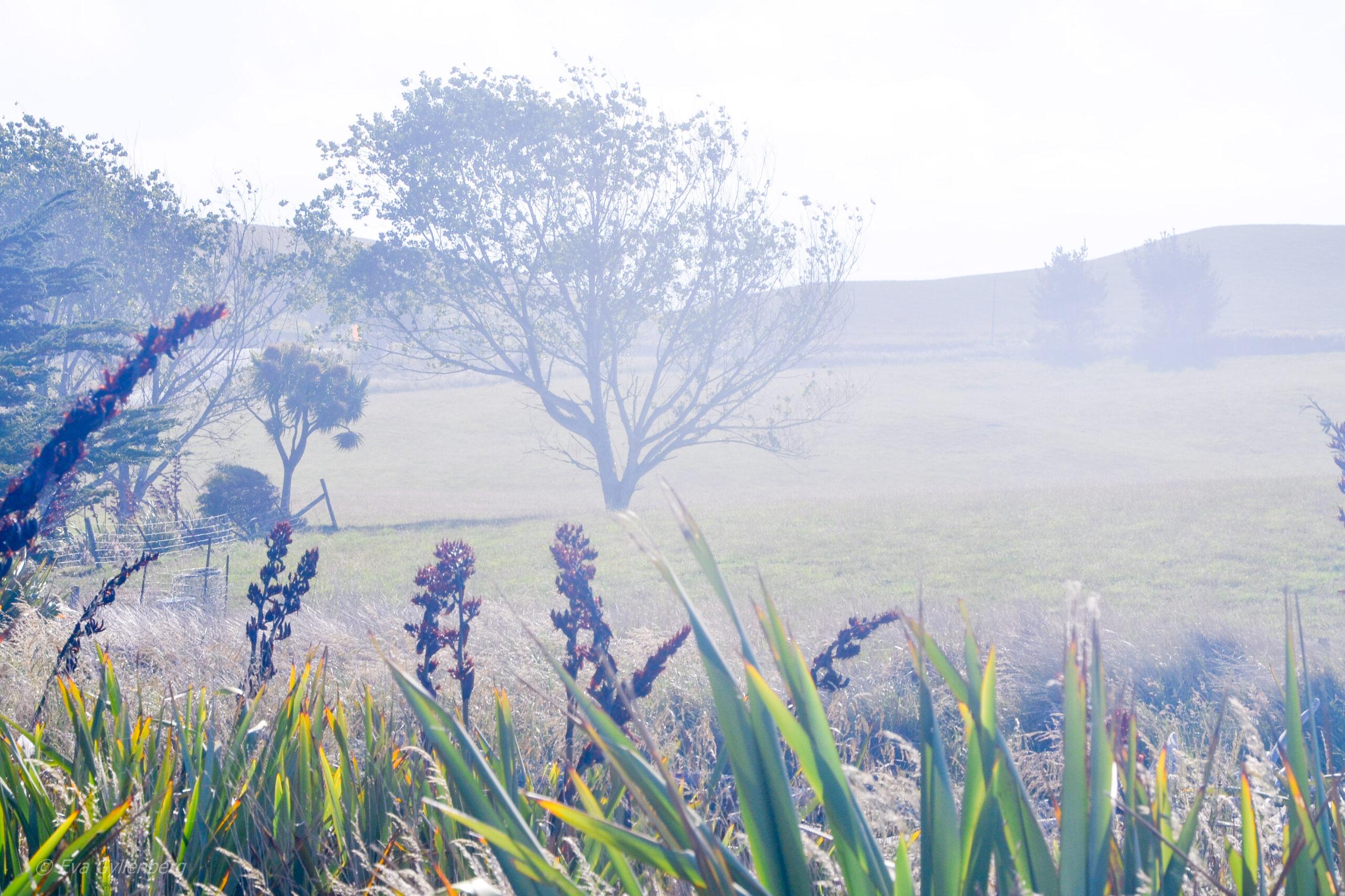 Landskap utanför Oamaru - Nya Zeeland