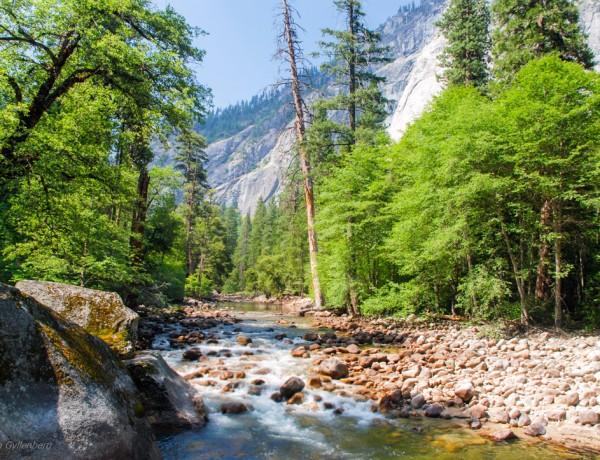 Mercer River - Yosemite