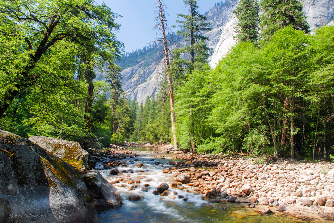 Mercer River - Yosemite
