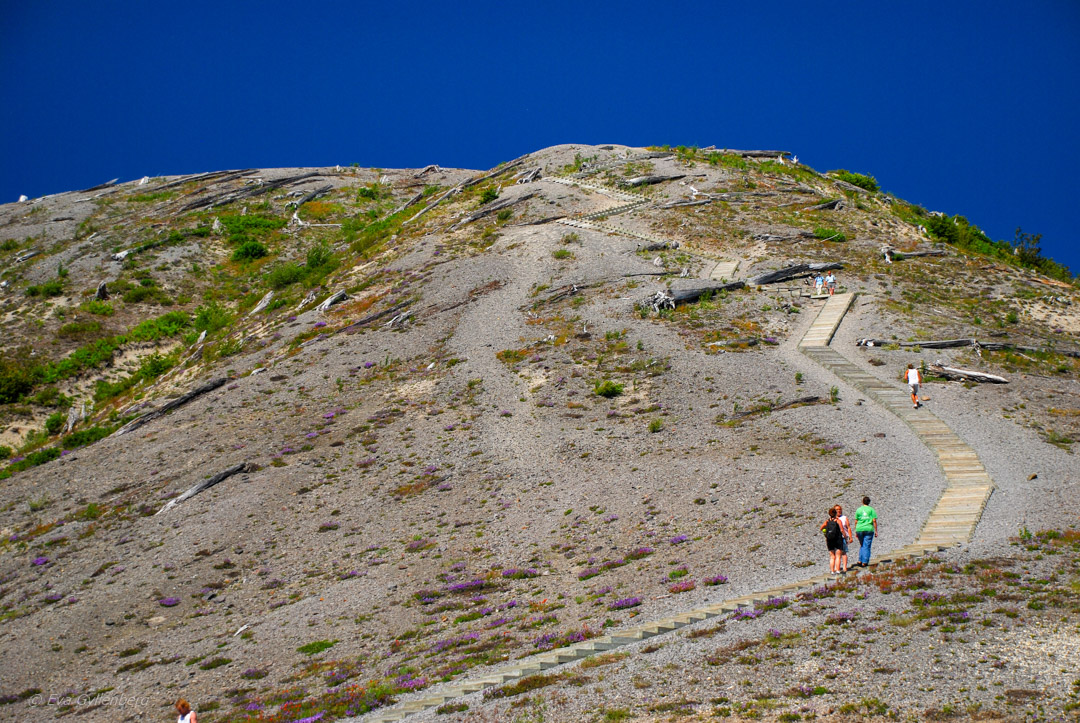 Windy Ridge - Mount St Helens