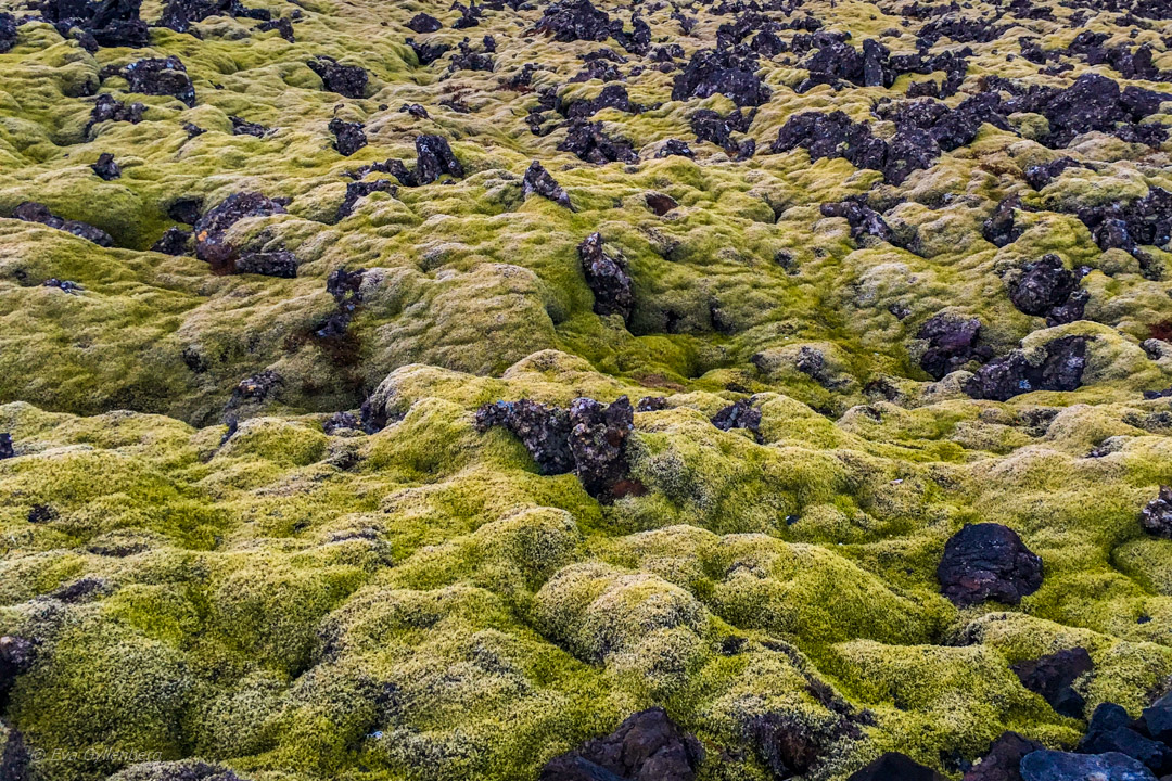 Island - lavaklädd mossa