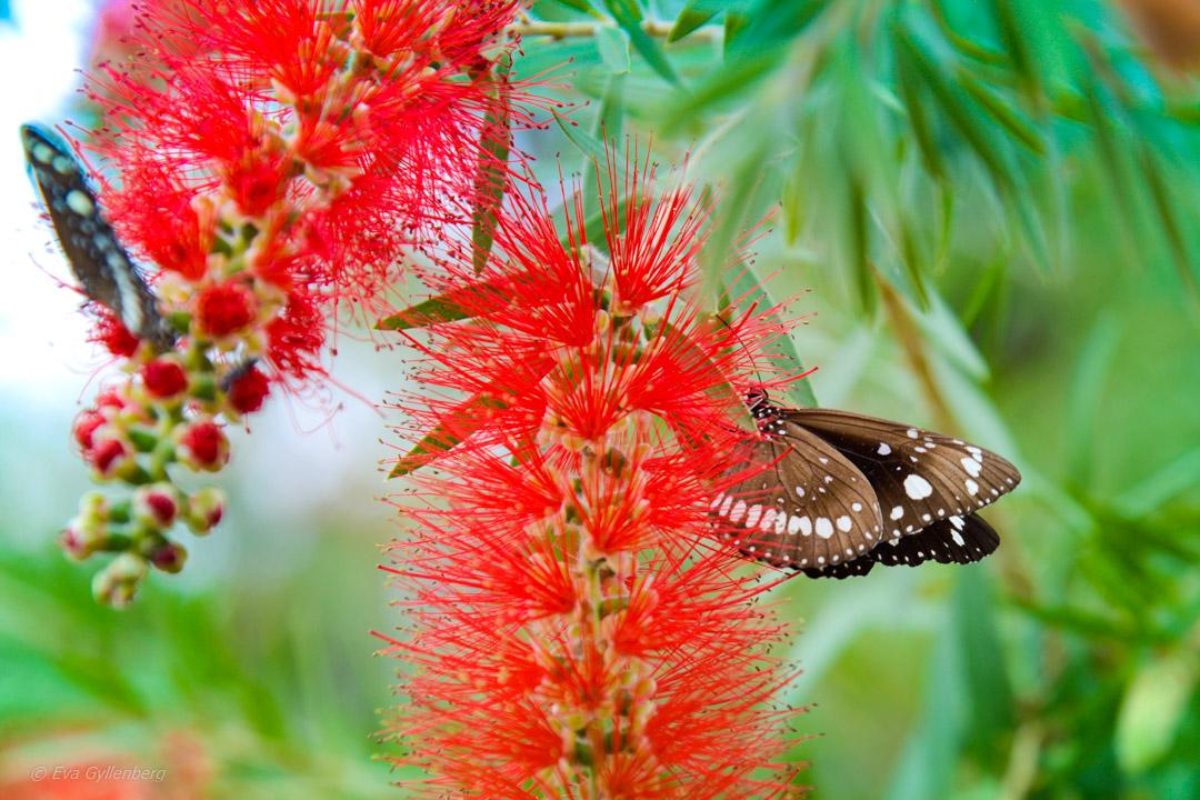 Undara - Äventyr i Australiens outback 24