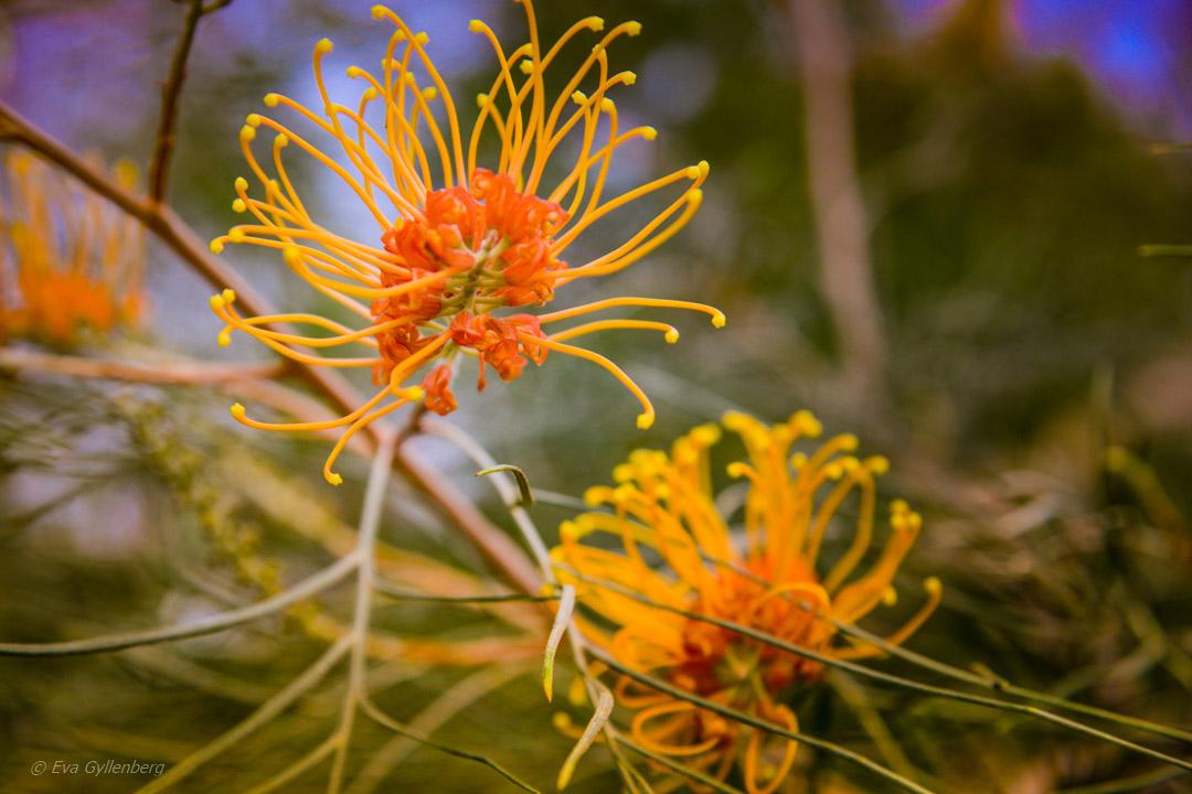 Undara - Äventyr i Australiens outback 38