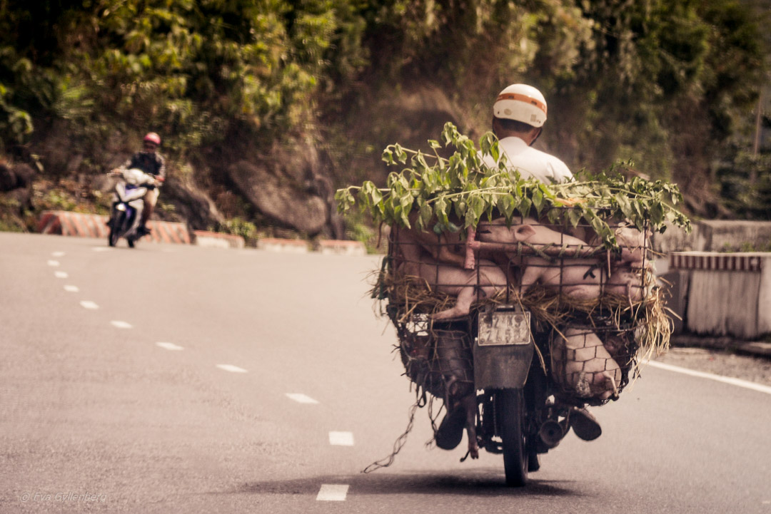 Hai Van Pass - en av världens vackraste vägar 17