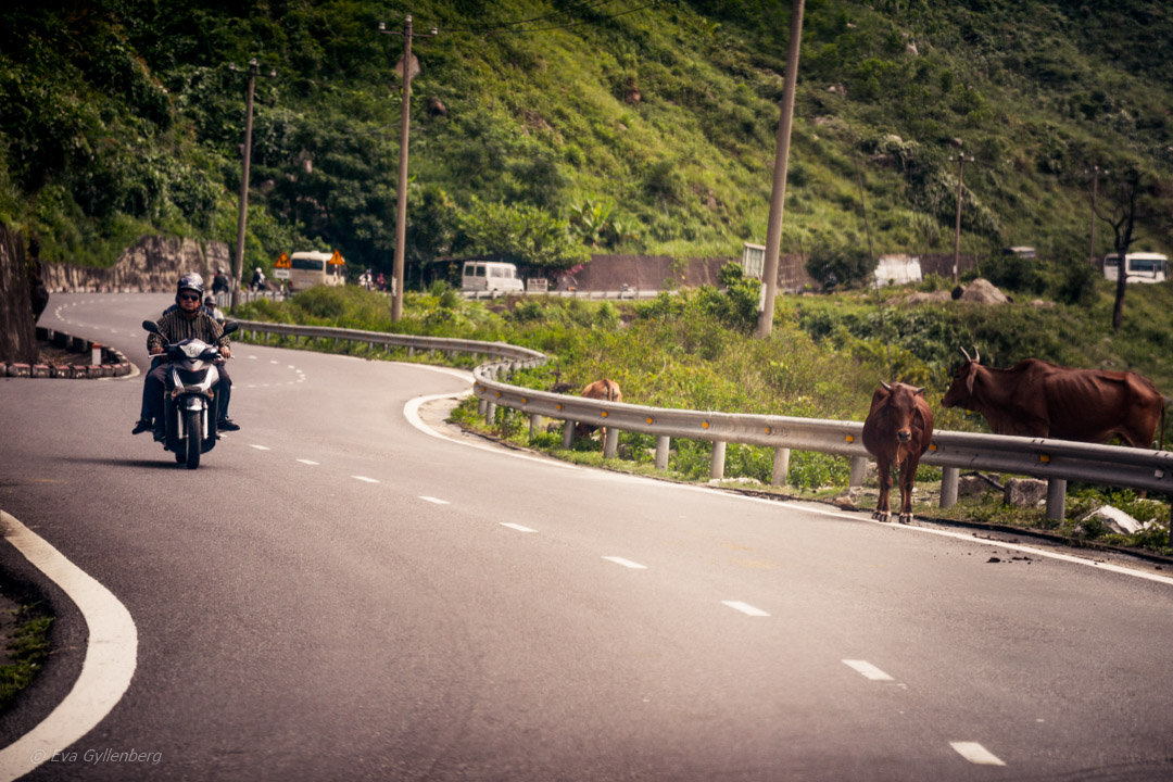 Kor på Hai Van Pass
