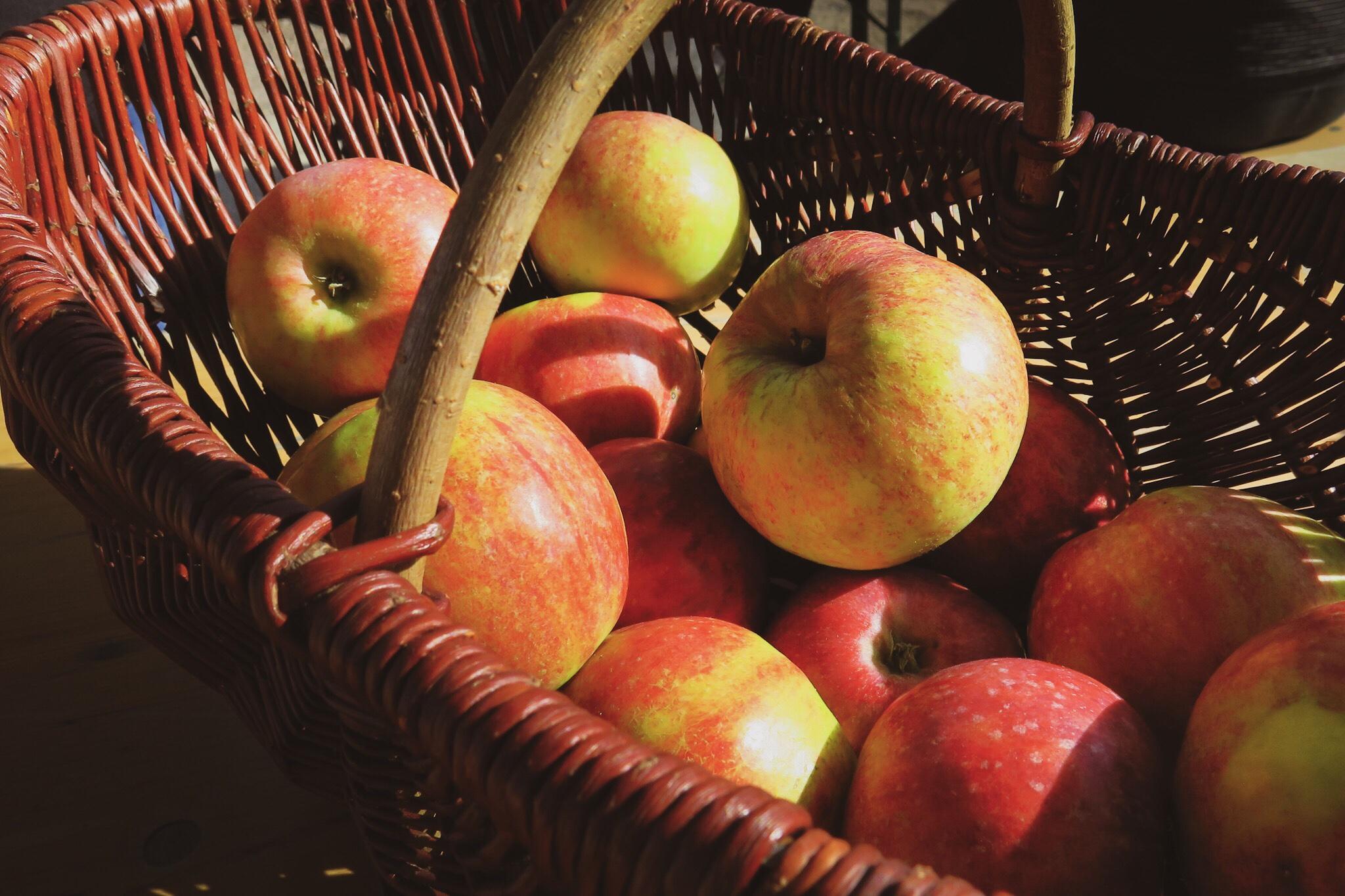Äpplen på Aptitrundan 2018