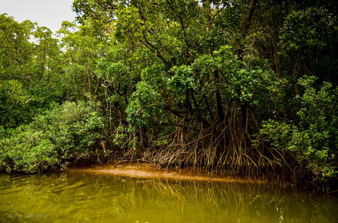 Daintree-Queensland-Australien