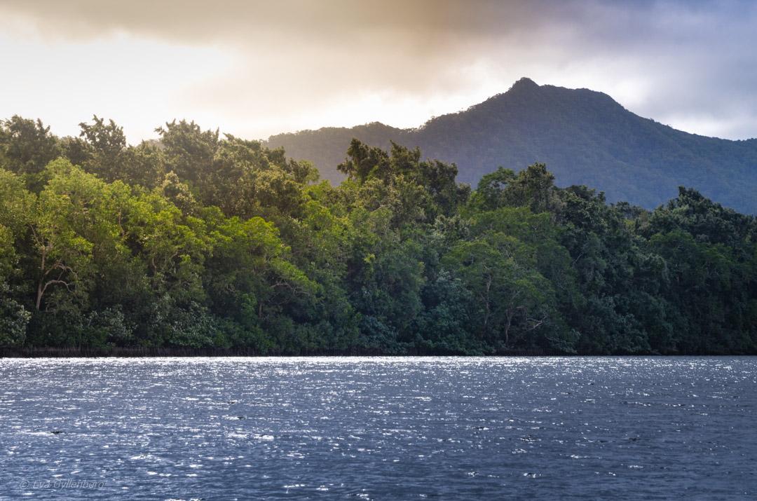 Daintree river - Queensland - Australien