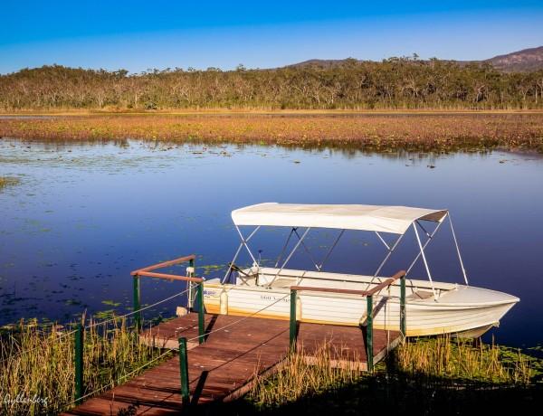 Fågelskådning vid Mareeba wetlands, Queensland 5