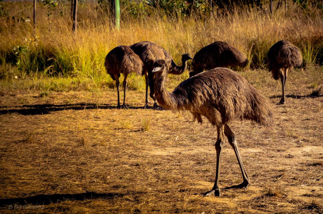 Mareeba Wetlands - Australia