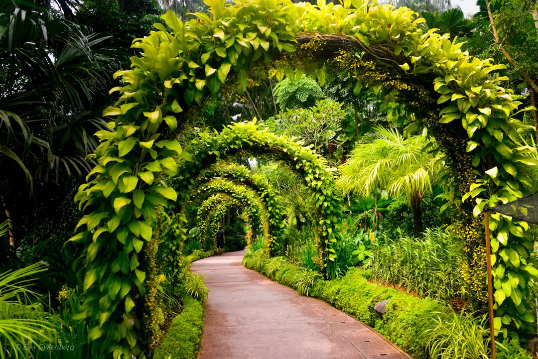 Singapore botanic gardens – En grön oas i stora staden