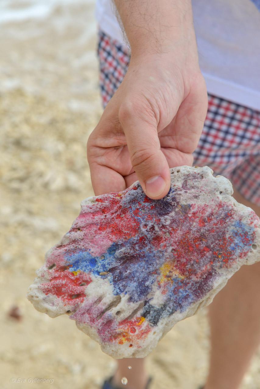 Koraller - Nudey Beach - Fitzroy Island