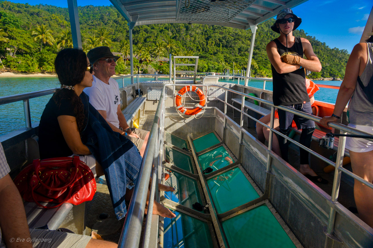 Fitzroy Island - Glassbottomboat
