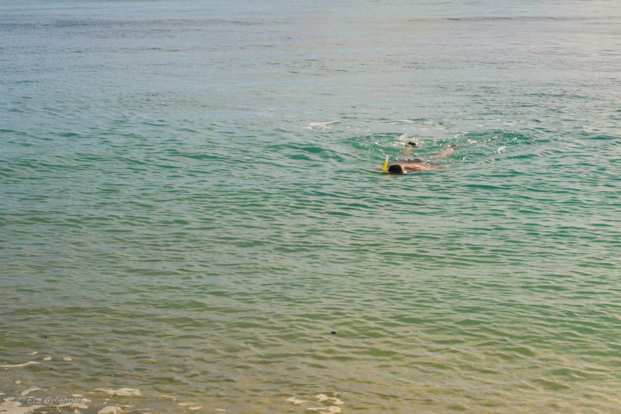 Fitzroy Island snorkling